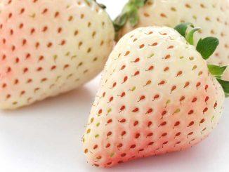 Λευκές φράουλες