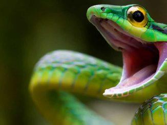 Άνθρωπος αντιμέτωπος με φίδι