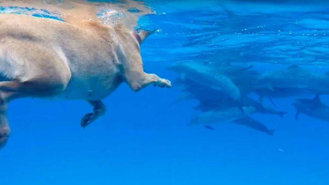 Δελφίνι παίζει με σκύλο DataNews TV